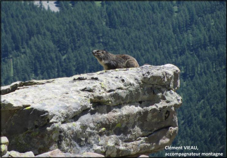 Séance bronzette de marmotte
