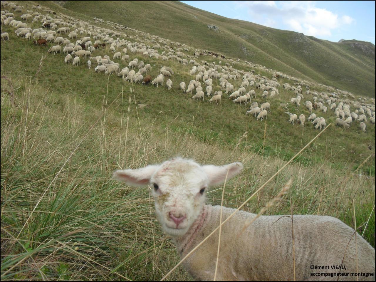 Rencontre avec le berger